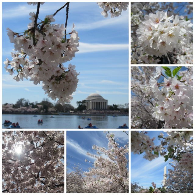 Some of the gorgeous views of the blossoms on Saturday