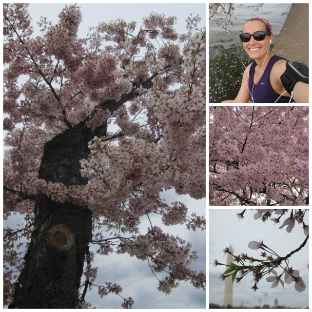 Views from my walk around the Tidal Basin on Monday