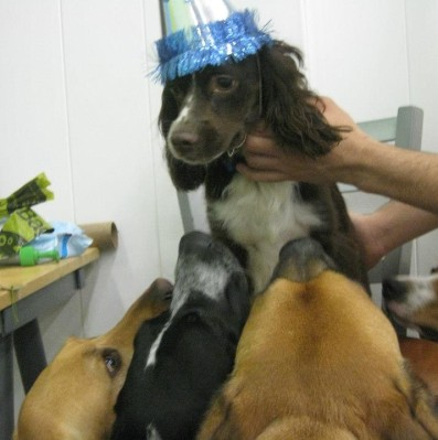 Riley celebrating his first birthday with his friends at doggie daycare last year