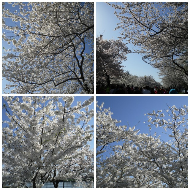 The blossoms were even more breath taking in person!