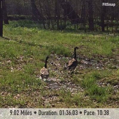 9.02 mile run