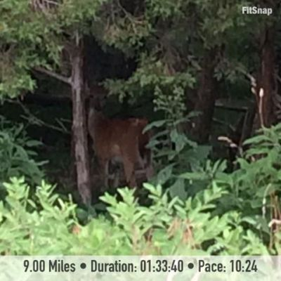During Saturday's long run, I encountered another deer.